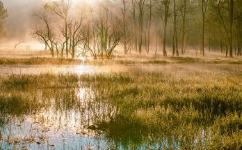 Swamp with sunrise
